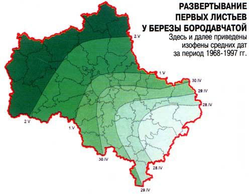Карта развертывания первых листьев у березы бородавчатой