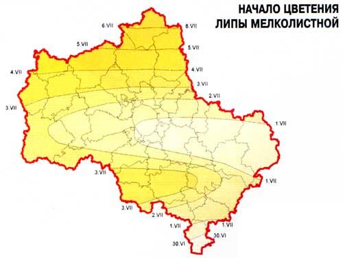 Карта цветения липы